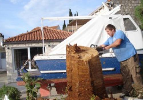 Vrtlar sprjecava propadanje palmi